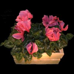Cassa per fiori - Frontale con fiori