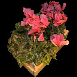 Cassa per fiori - Laterale sinistro con fiori
