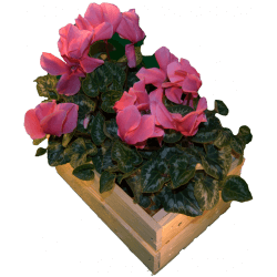 Cassa per fiori - Laterale destro con fiori