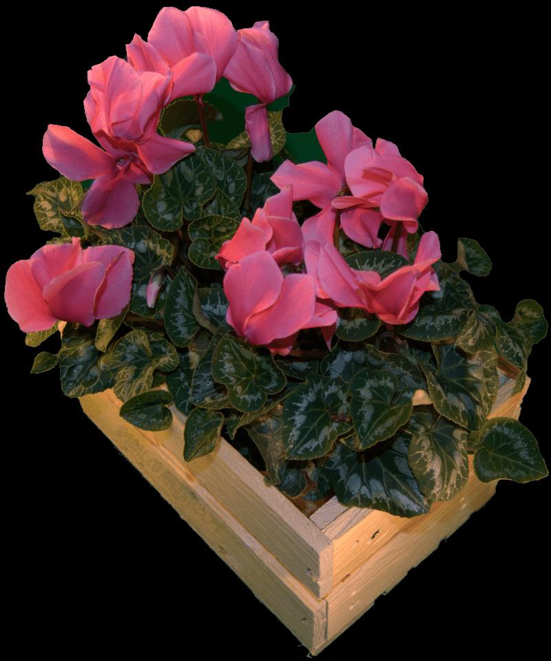 Cassa da fiori in regalo